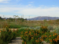 Santa Monica Conservancy  Image