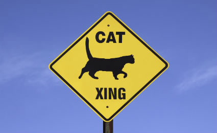 Cat Crossing Sign Image
